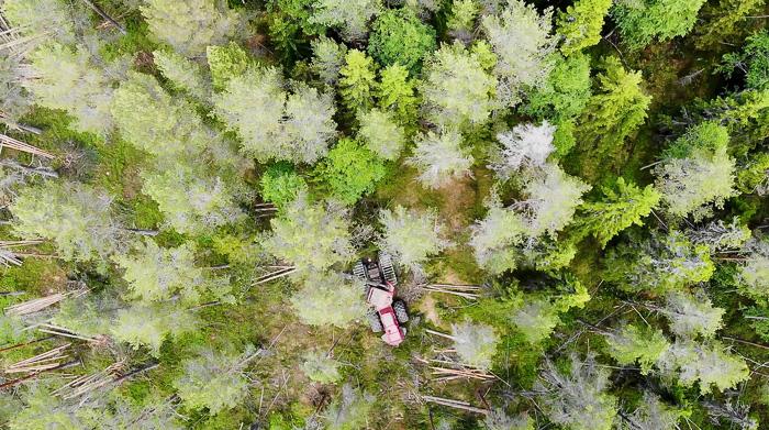 Skördare gallrar i skogen