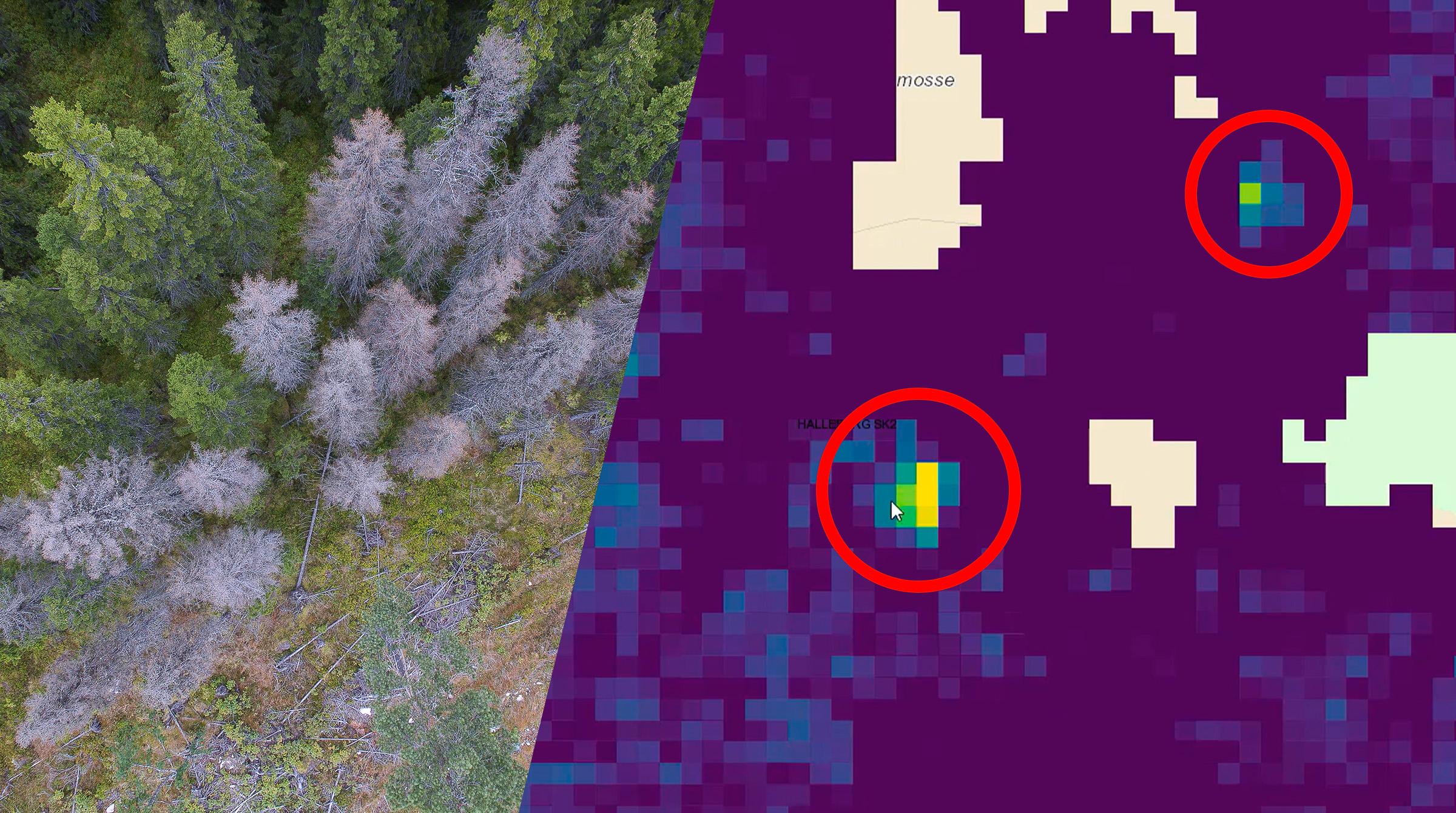 Granbarkborre identifieras på ArcGIS-karta