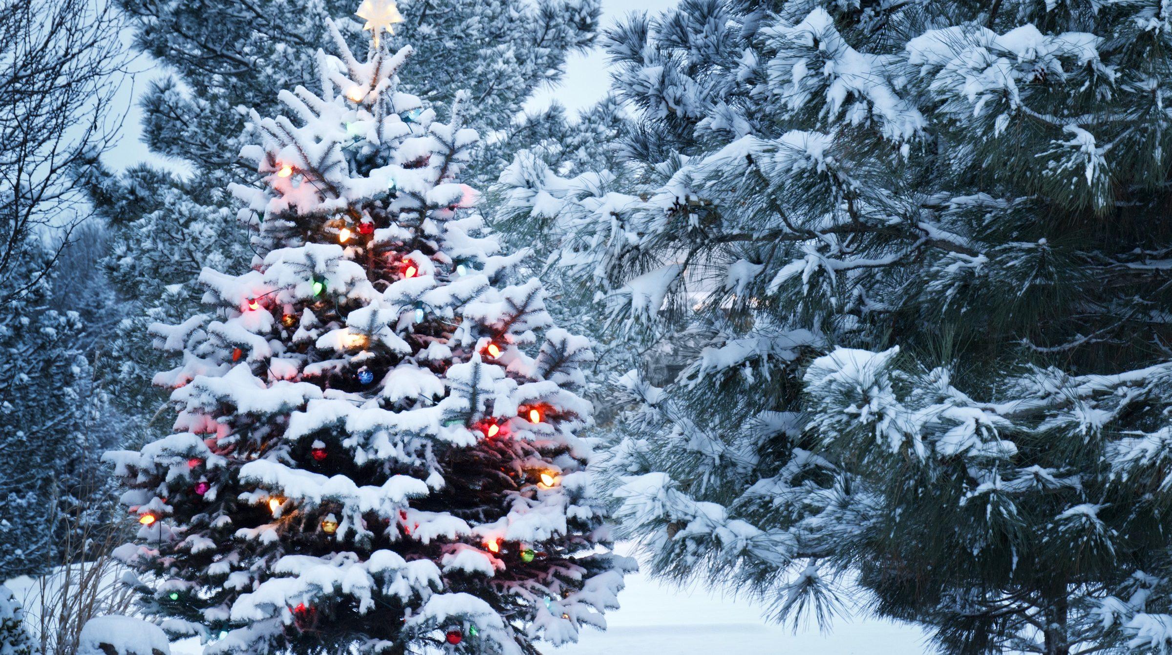 Lysande snötäckt julgran i skog